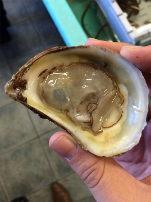An oyster from Lobster on the Wharf