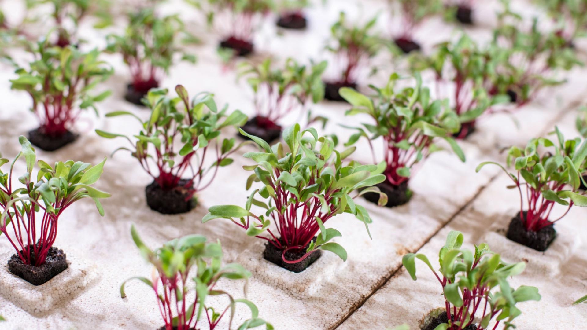 future-crops