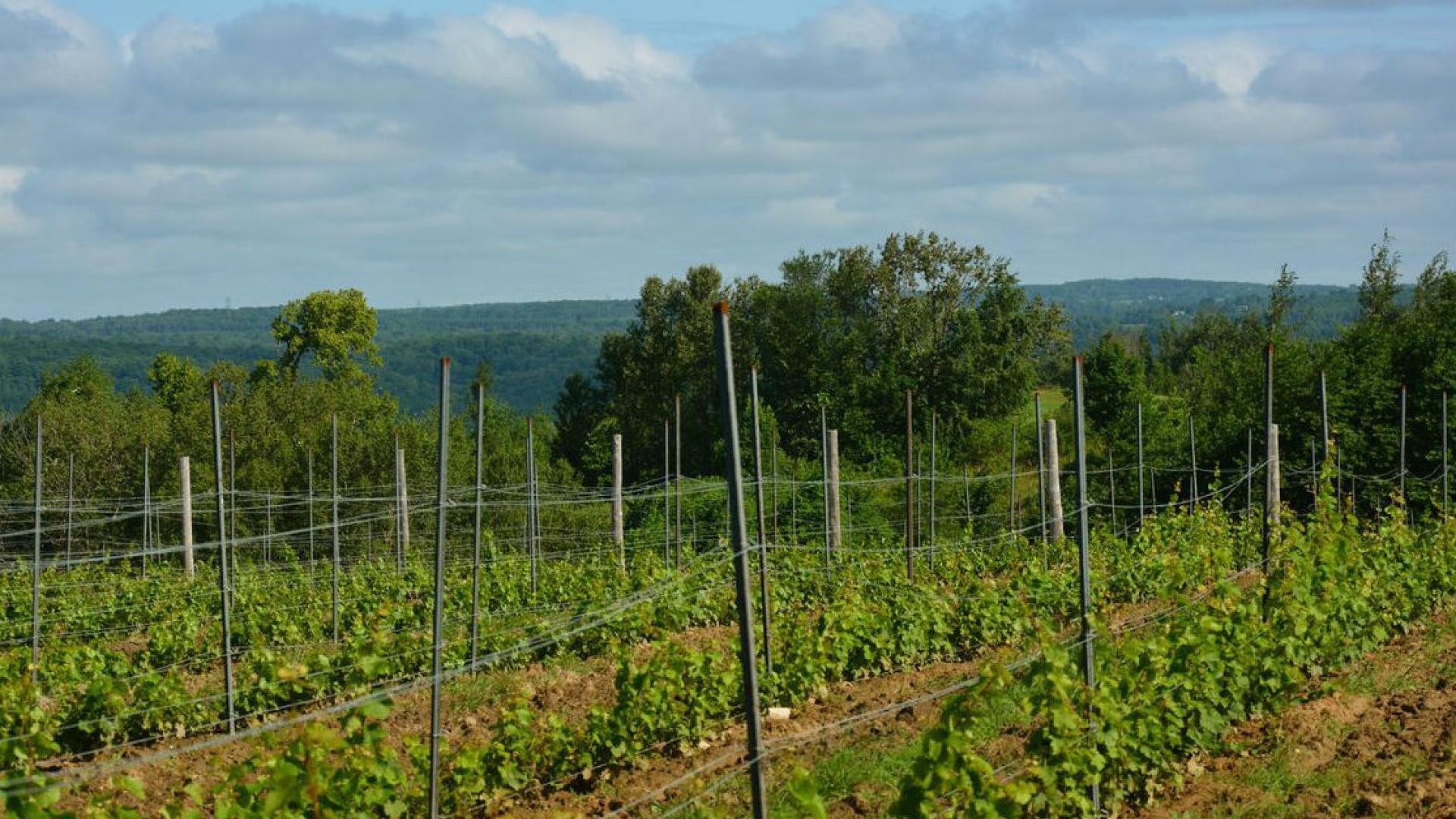 Win a Weekend Getaway to Adamo Estate Winery