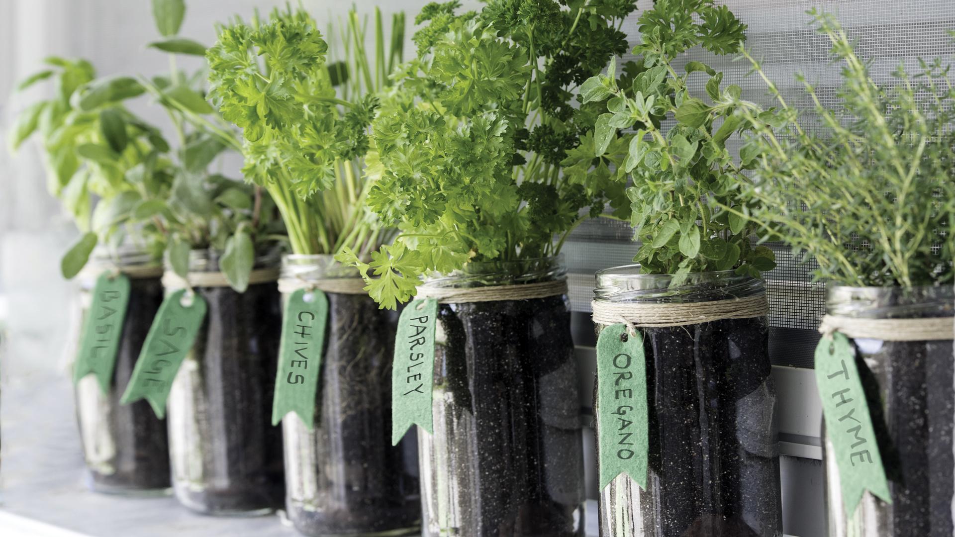 Gardening for beginners   Growing vegetables and herbs indoors