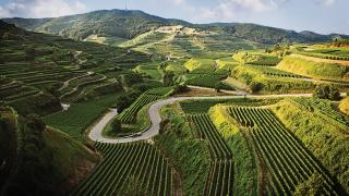 Wines of Germany   Germany is one of the world's most prolific wine producers