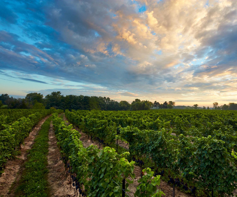 Le Clos Jordanne winery