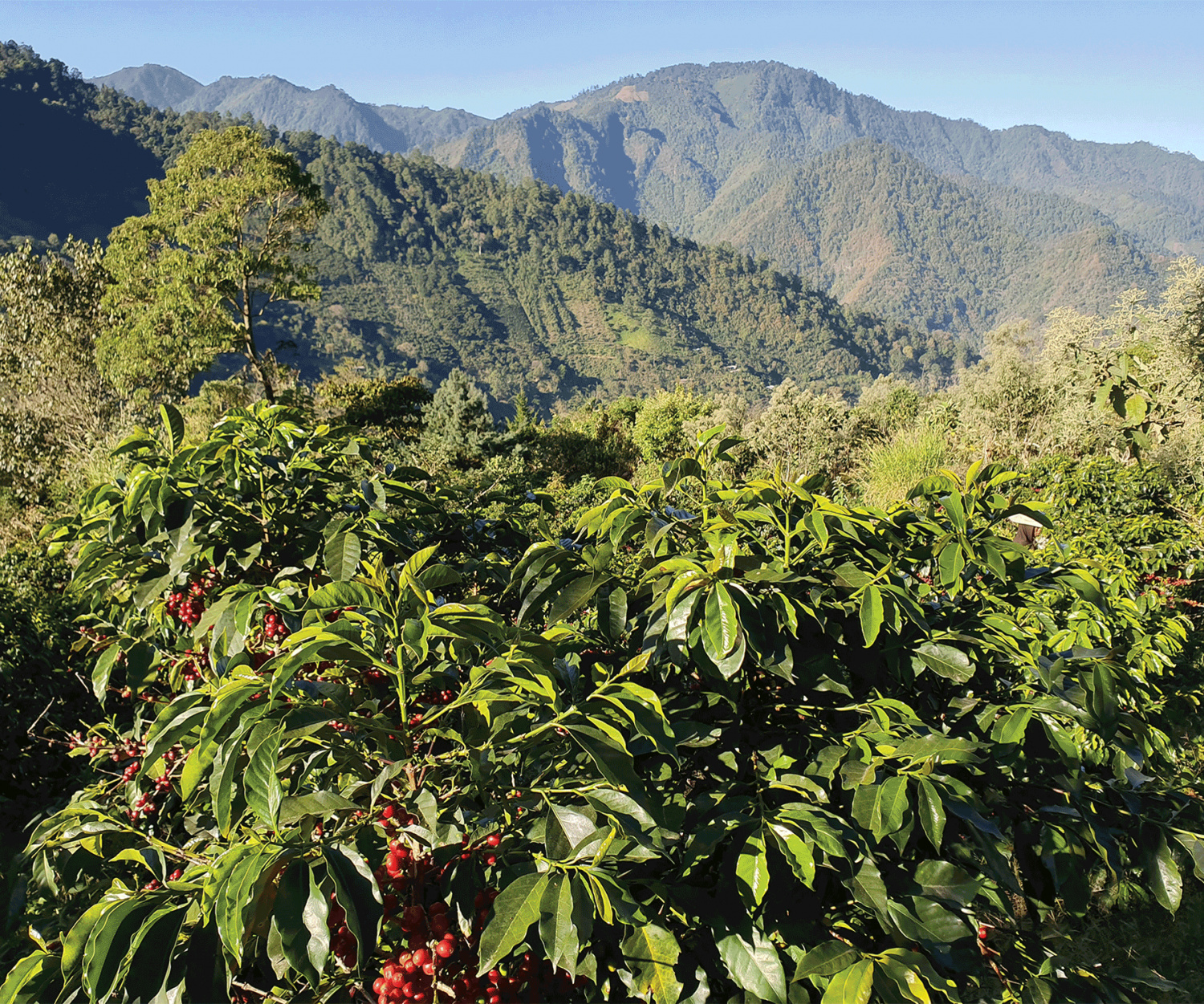 Van Houtte Signature Collection Fairtrade coffee | Coffee growing region in Mexico