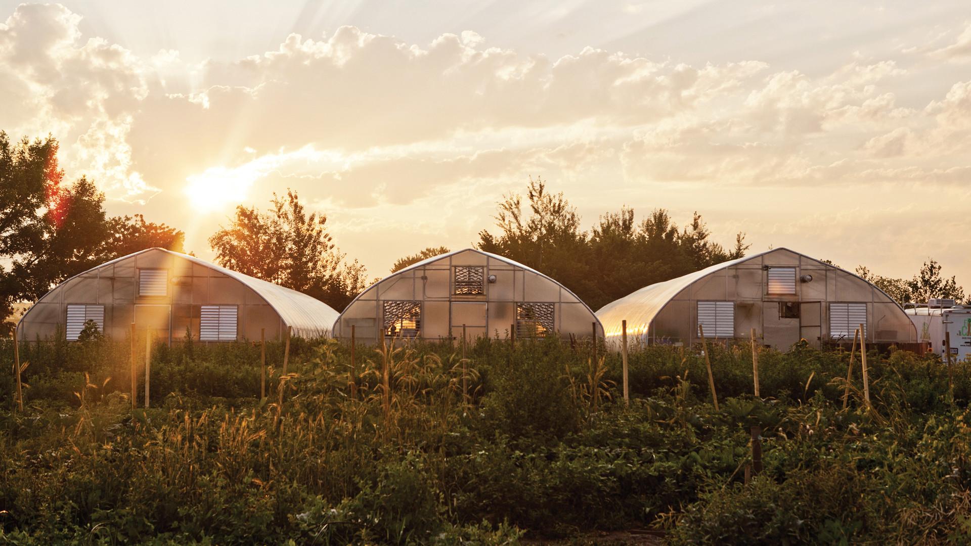 Fresh City Farms greenhouses