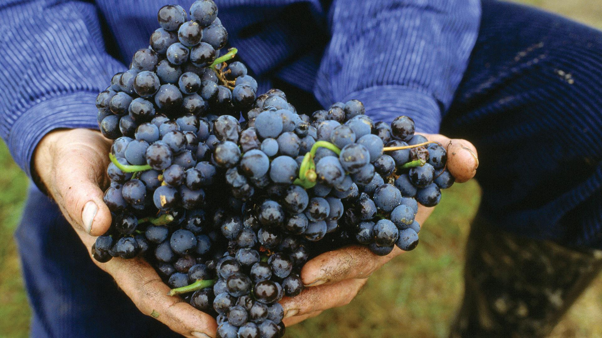 Wines of Germany | Spätburgunder is German for pinot noir