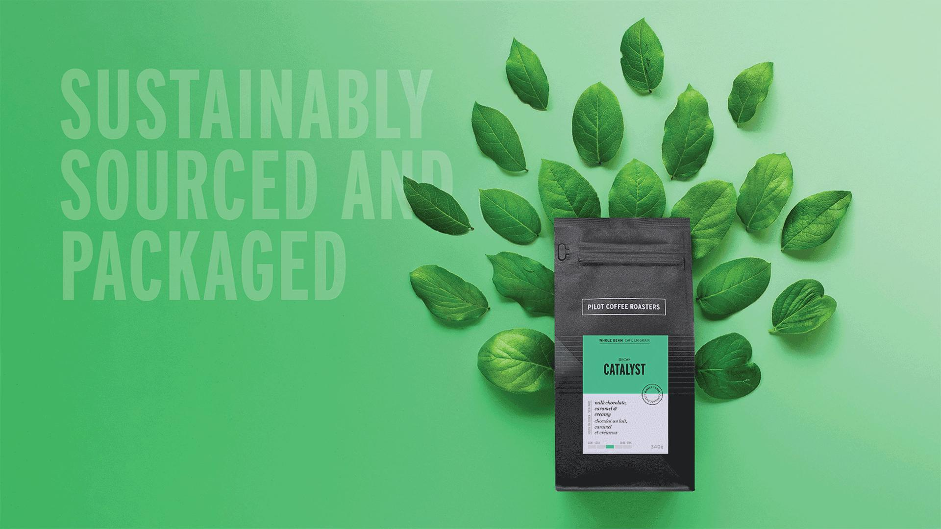 Win a six month Pilot Coffee subscription | Sustainably sourced and packaged