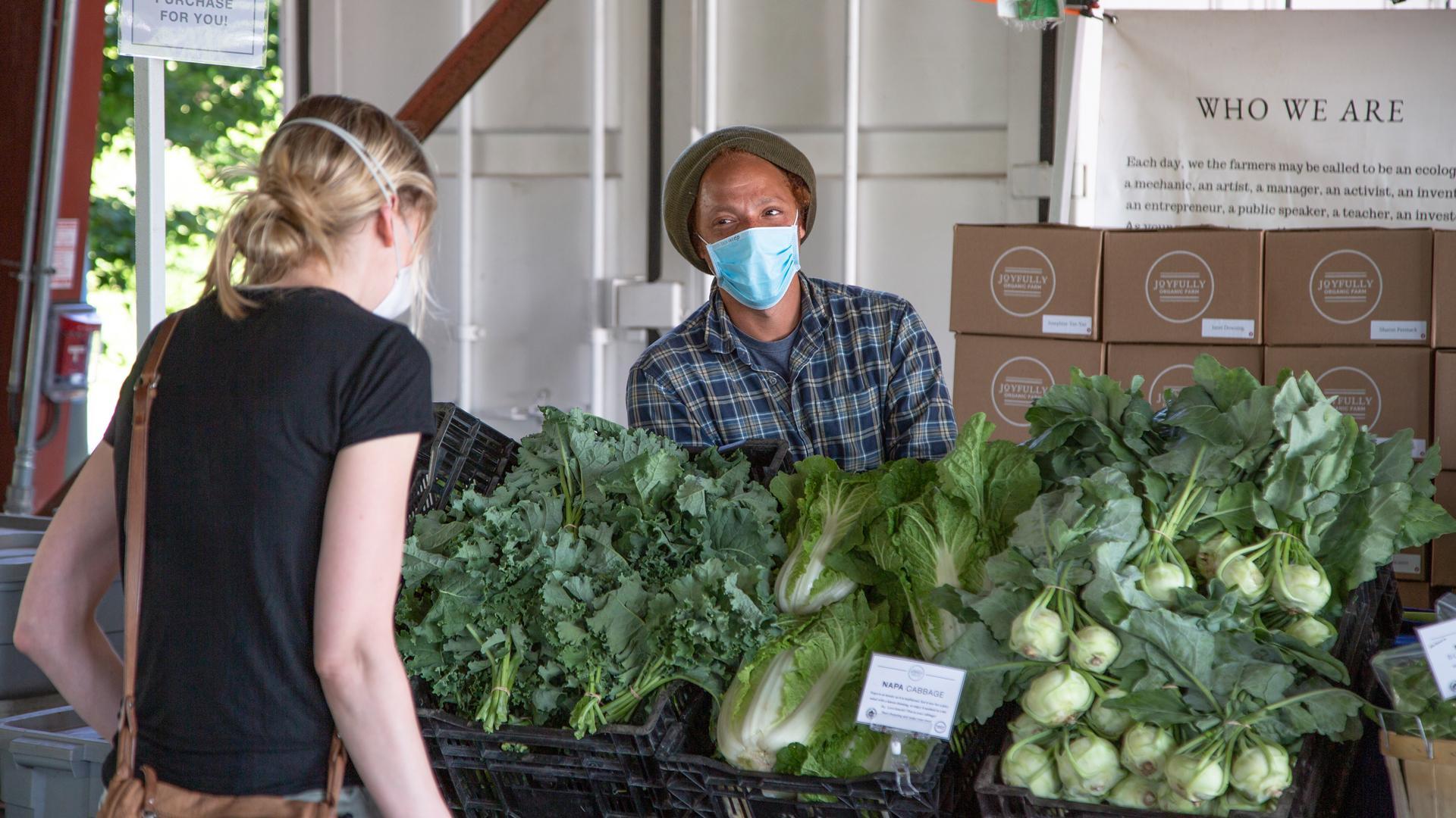 The freshest farmers' markets in Toronto | Fresh lettuce at the Brickworks Farmers' Market