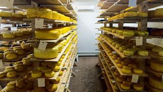 Gouda cheese at Glasgow Glen Farms