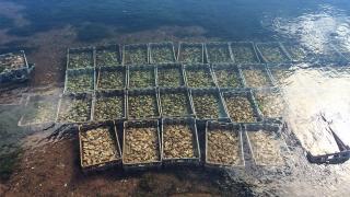 An oyster farm on PEI