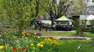 Things to do in Toronto this August 2021 | Dufferin Grove Farmers' Market