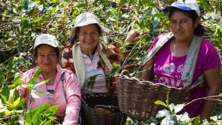 Sister's Story coffee | Three women in Peru picking coffee beans