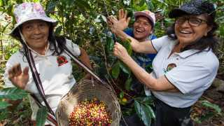 Sister's Story coffee | Women picking coffee