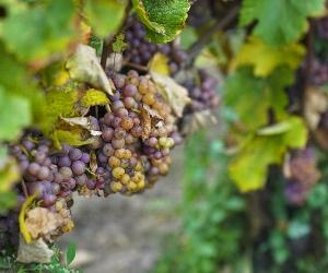 wine-101-finding-vino