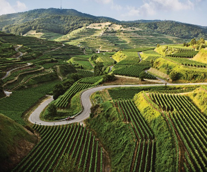Wines of Germany | Germany is one of the world's most prolific wine producers