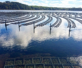 An oyster farm on Prince Edward Island