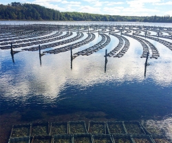 An oyster farm on Prince Edward Island