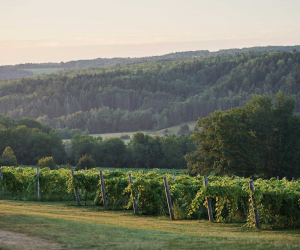 Canadian pét-nats | Benjamin Bridge vineyard at sunrise