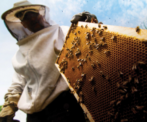 Canadian mead: a beekeeper