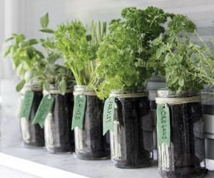 Gardening for beginners | Growing vegetables and herbs indoors